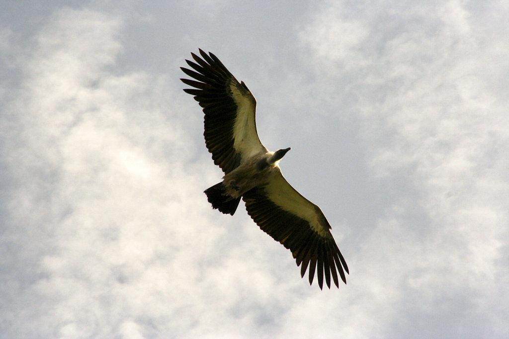 13. Ethiopie - Gonder. Vale gier