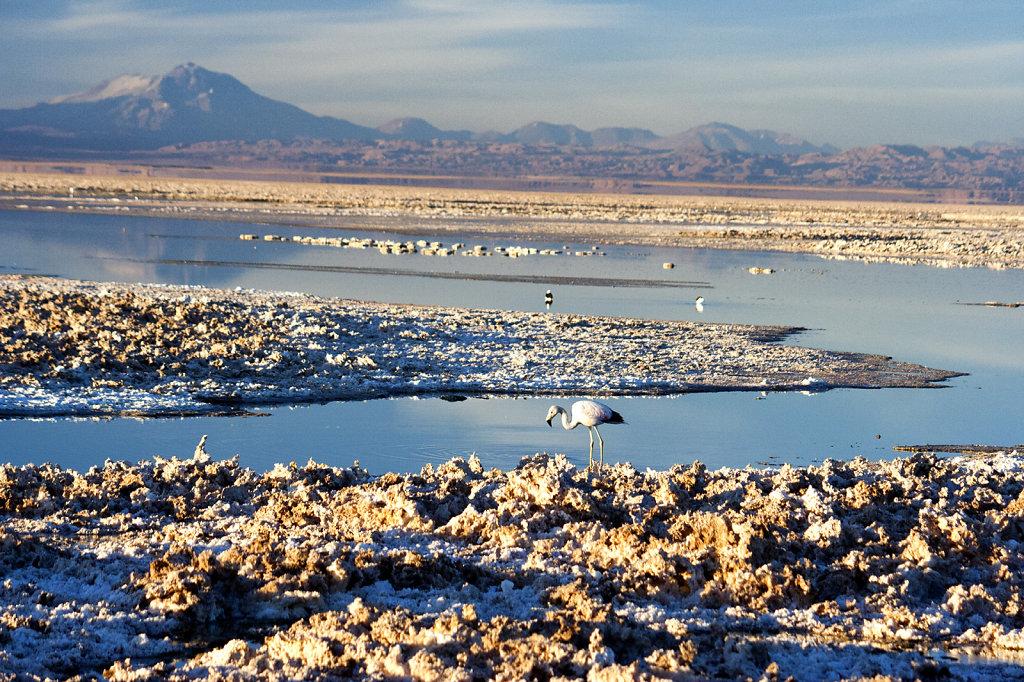 11. Chili Noord - Atacama. Zoutmeer
