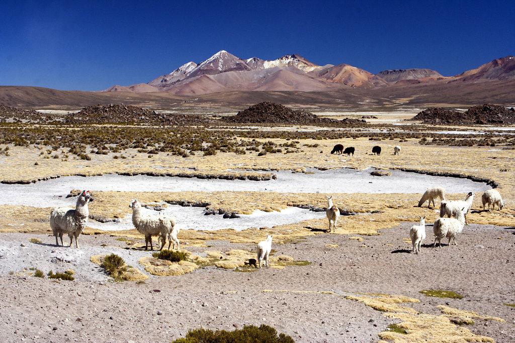 18. Chili Noord - Atacama. Hoogvlakte